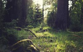 Randonnée Forêt de Carnelle